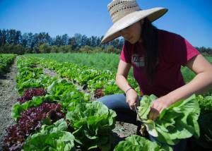 Doing the work at the Abundant Table Farm Project in Santa Paula, CA.