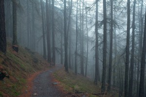 dark_path_field_path_pathway_tree_organic_agriculture_outdoors-1338816.jpg!d