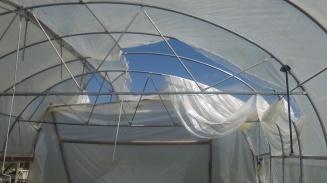 Greenhouse aftermath.jpg