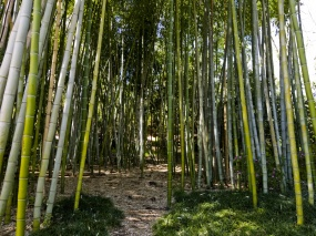 bamboo-forest-background.jpg